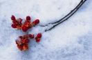 foto winter_140