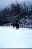 foto winter_141