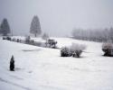 foto winter_142