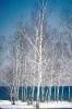 foto winter_15
