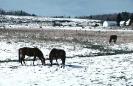 foto winter_163