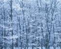 foto winter_172