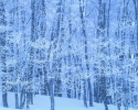 foto winter_174