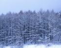 foto winter_176