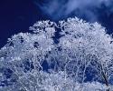 foto winter_178