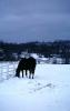 foto winter_213