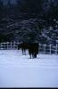 foto winter_237