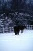 foto winter_23