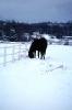 foto winter_35