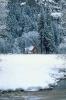 foto winter_3