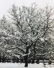 foto winter_57