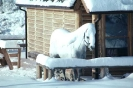foto winter_60