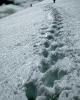 foto winter_61