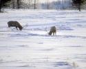 foto winter_74