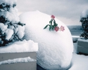 foto winter_77