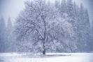 foto winter_83