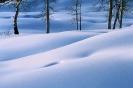 foto winter_96
