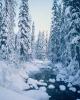 foto winter_97