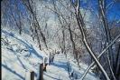 foto winter_9