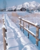 winter_352