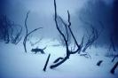 winter_423