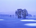 winter_450