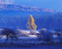 winter_457