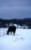 winter_473