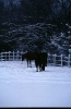 winter_495