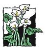 bloemen_100