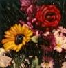 bloemen_108