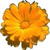 bloemen_10