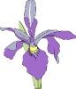 bloemen_122