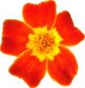 bloemen_12