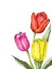 bloemen_130