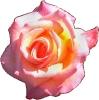 bloemen_13