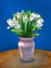 bloemen_143