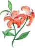 bloemen_149