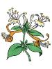 bloemen_152