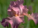 bloemen_172