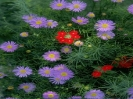 bloemen_173