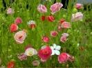 bloemen_174