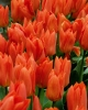 bloemen_175