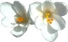 bloemen_17