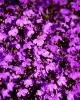 bloemen_180