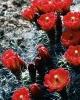 bloemen_181