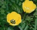 bloemen_185