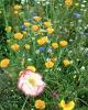 bloemen_186