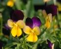 bloemen_187