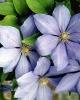 bloemen_189